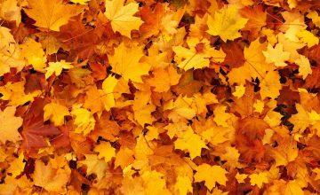 Autumn-Ayurveda